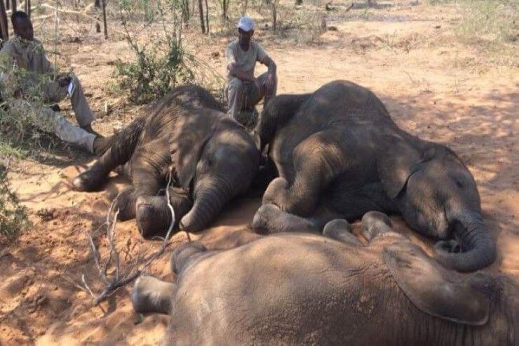 การเสียชีวิตของช้าง ในบอตสวานา อาจจะเสียชีวิตจากพิษของสาหร่ายที่เป็นพิษ การเสียชีวิตอย่างกะทันหันของช้าง 320 ตัวทางตะวันตกเฉียงเหนือ